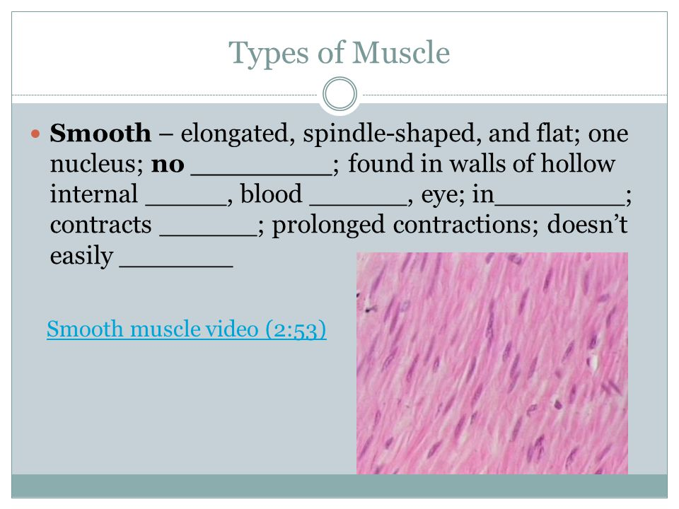 Muscular System Terms Latent period and contraction & relaxation phases  Latent – muscle prepares for _____  Contraction – ____ and ____ bind together; muscle _____  Relaxation – actin and myosin _____; contraction _____