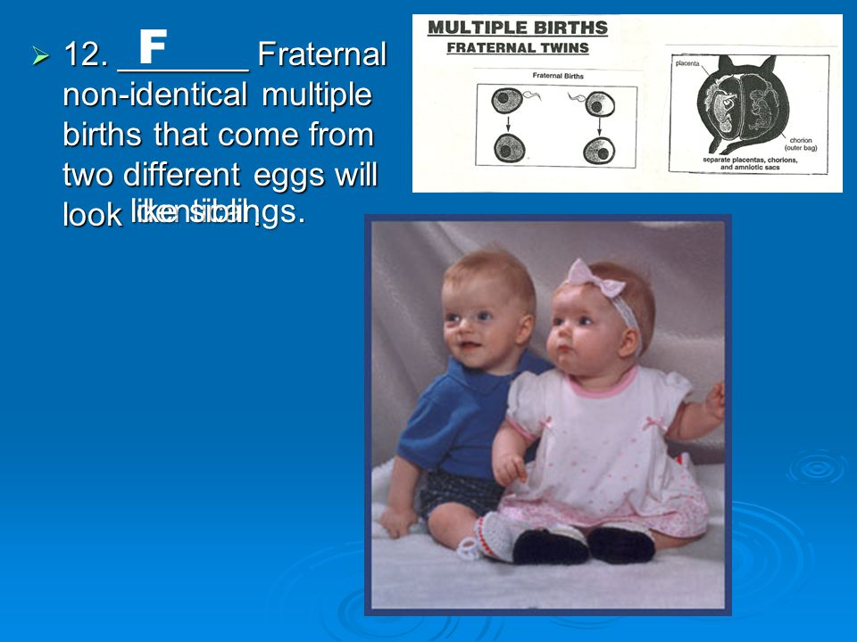  12. _______ Fraternal non-identical multiple births that come from two different eggs will look.