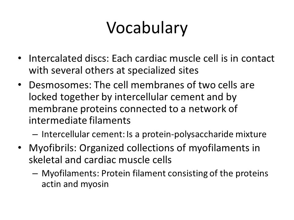 Vocabulary Intercalated discs: Each cardiac muscle cell is in contact with several others at specialized sites Desmosomes: The cell membranes of two cells are locked together by intercellular cement and by membrane proteins connected to a network of intermediate filaments – Intercellular cement: Is a protein-polysaccharide mixture Myofibrils: Organized collections of myofilaments in skeletal and cardiac muscle cells – Myofilaments: Protein filament consisting of the proteins actin and myosin