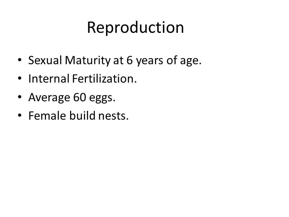 Reproduction Sexual Maturity at 6 years of age. Internal Fertilization.