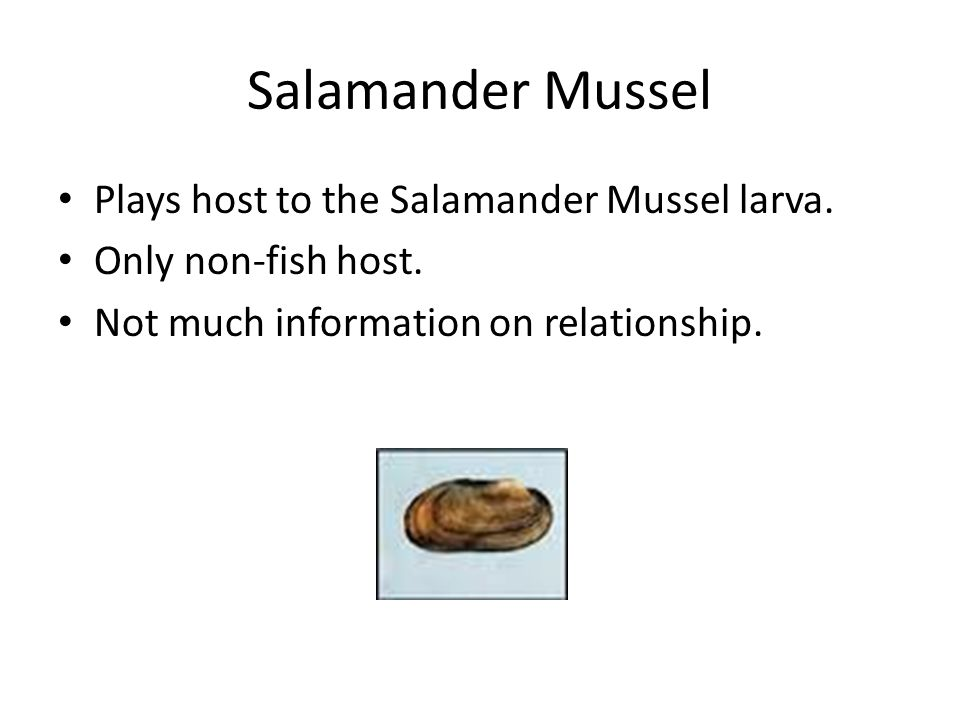 Salamander Mussel Plays host to the Salamander Mussel larva.