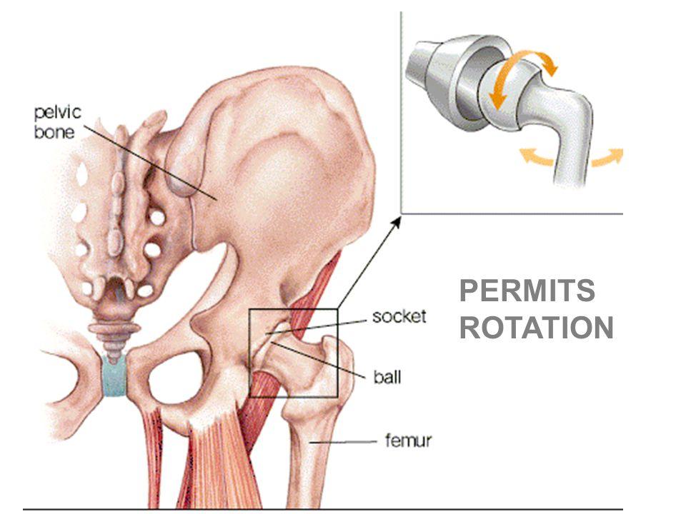PERMITS ROTATION