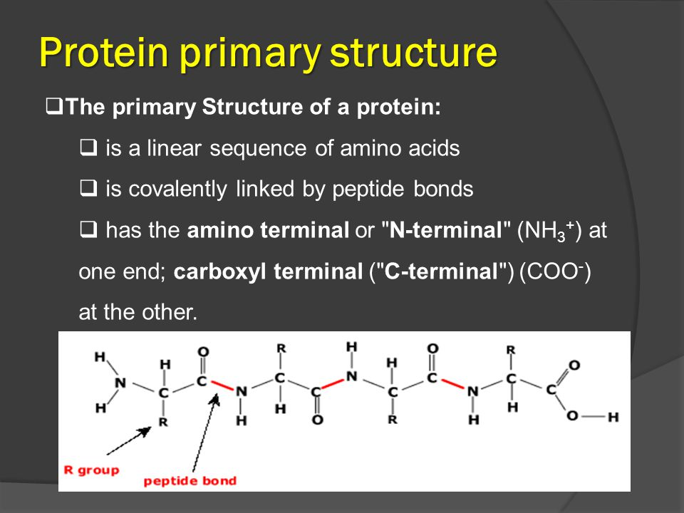 Protein Secondary Structure  The secondary structure: is that polypeptide chains are coiled and folded or pleated into different shapes.