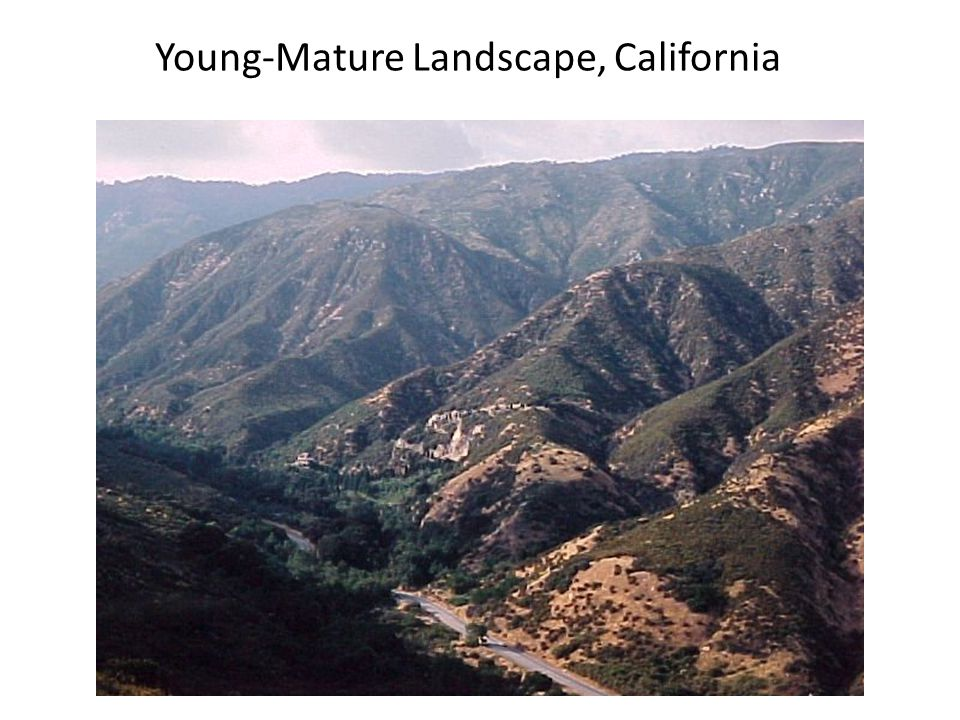 Young-Mature Landscape, California