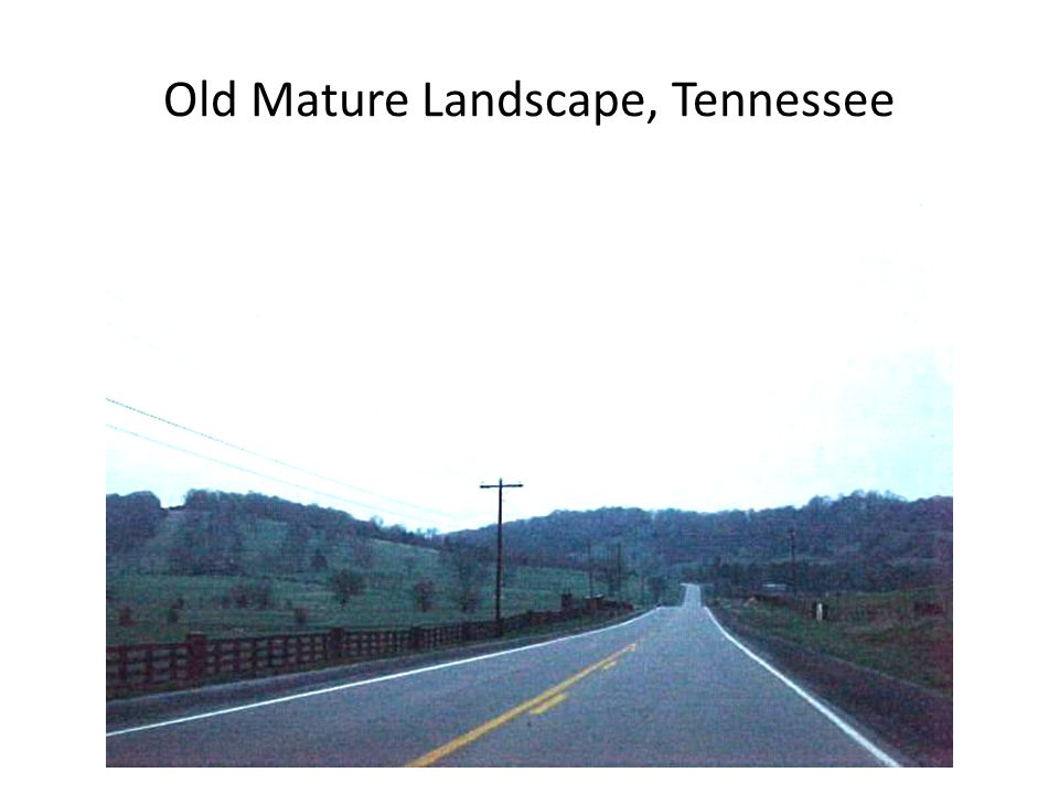 Old Mature Landscape, Tennessee