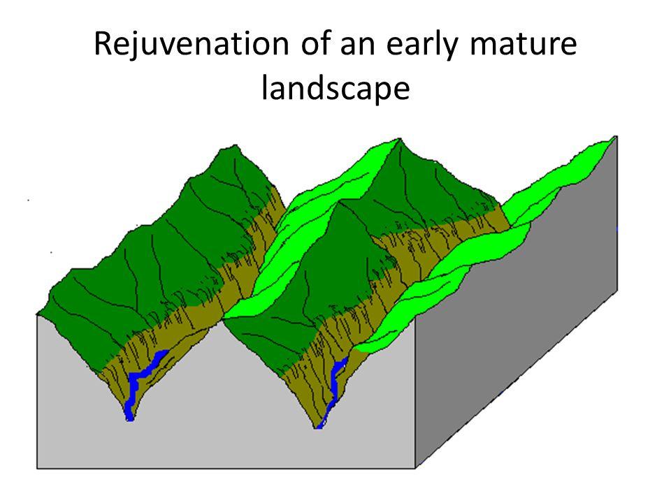 Rejuvenation of an early mature landscape