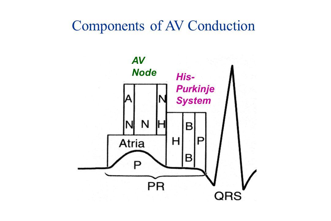 Components of AV Conduction His- Purkinje System AV Node