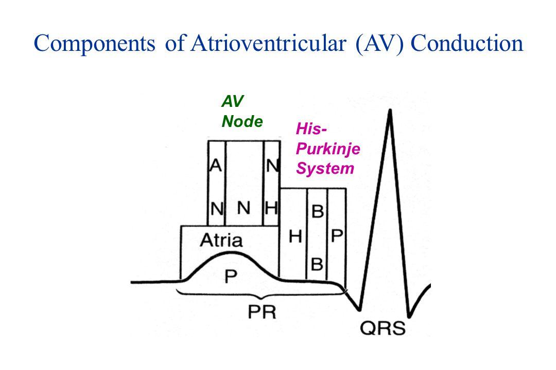 Components of Atrioventricular (AV) Conduction His- Purkinje System AV Node