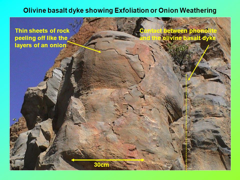 Olivine basalt dyke showing Exfoliation or Onion Weathering 30cm Thin sheets of rock peeling off like the layers of an onion Contact between phonolite and the olivine basalt dyke