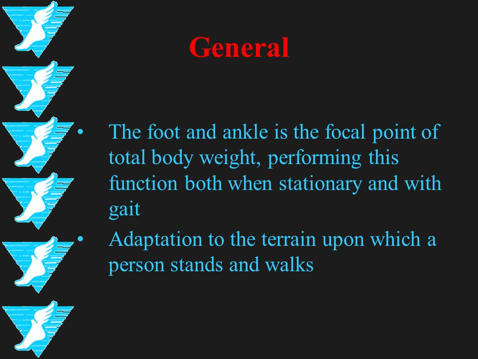 General The foot and ankle is the focal point of total body weight, performing this function both when stationary and with gait Adaptation to the terrain upon which a person stands and walks