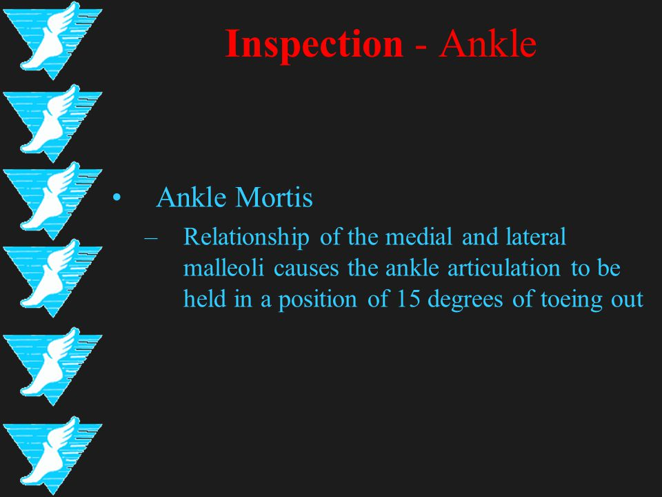 Inspection - Ankle Ankle Mortis –Relationship of the medial and lateral malleoli causes the ankle articulation to be held in a position of 15 degrees of toeing out