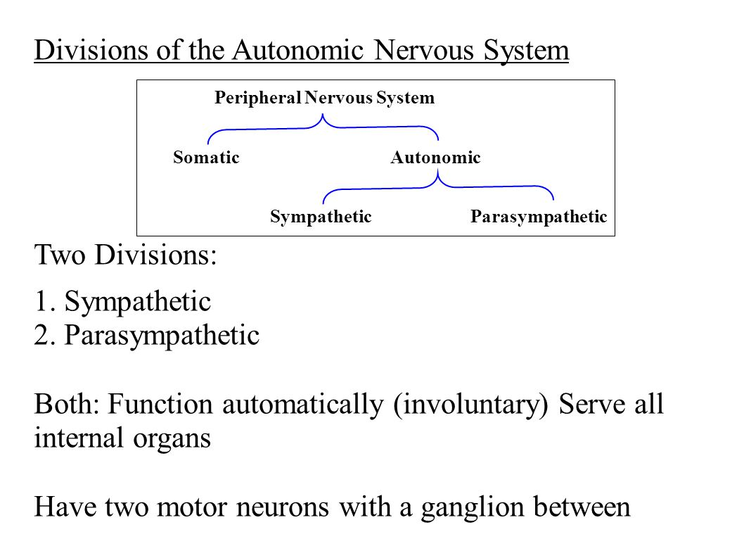 Divisions of the Autonomic Nervous System Two Divisions: 1. Sympathetic 2. Parasympathetic Both: Function automatically (involuntary) Serve all intern