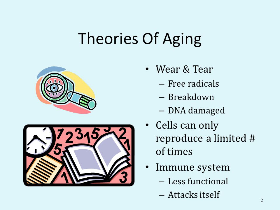Theories Of Aging Wear & Tear – Free radicals – Breakdown – DNA damaged Cells can only reproduce a limited # of times Immune system – Less functional – Attacks itself 2