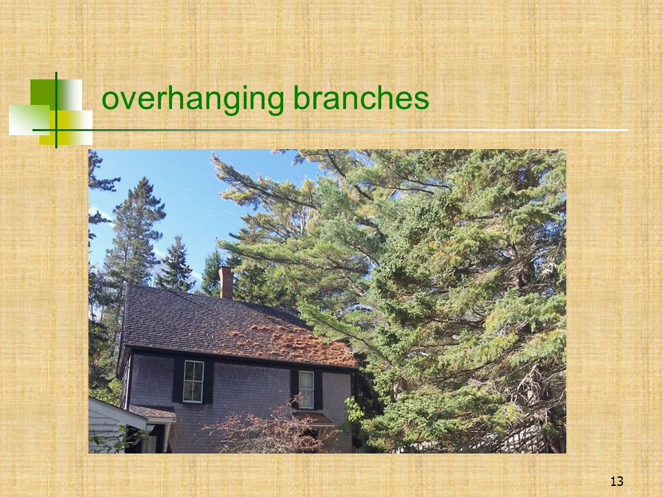 13 overhanging branches
