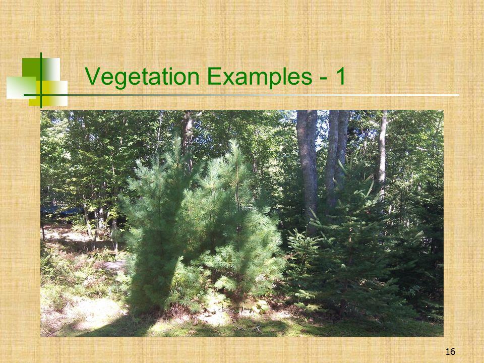 16 Vegetation Examples - 1