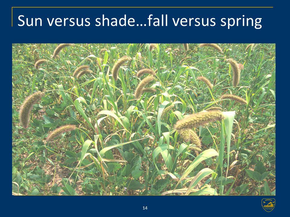 14 Sun versus shade…fall versus spring