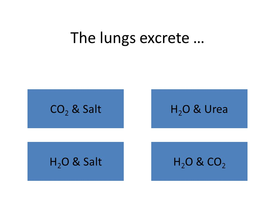 Gas exchange in the lungs takes place in the … BronchiolesAlveolus NoseBlood