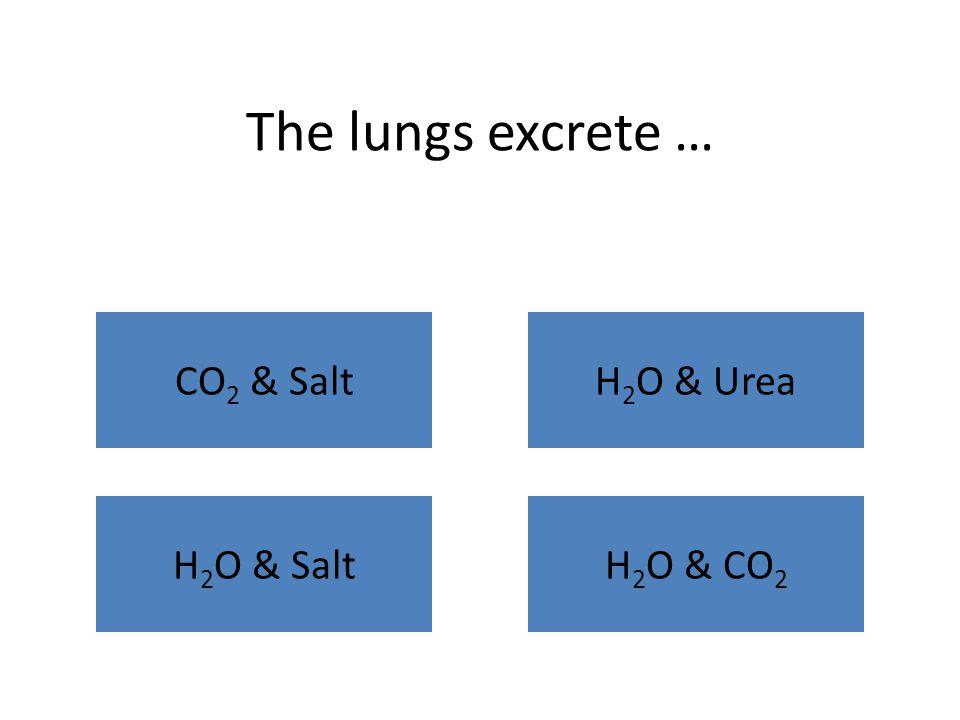 The lungs excrete … CO 2 & Salt H 2 O & SaltH 2 O & CO 2 H 2 O & Urea