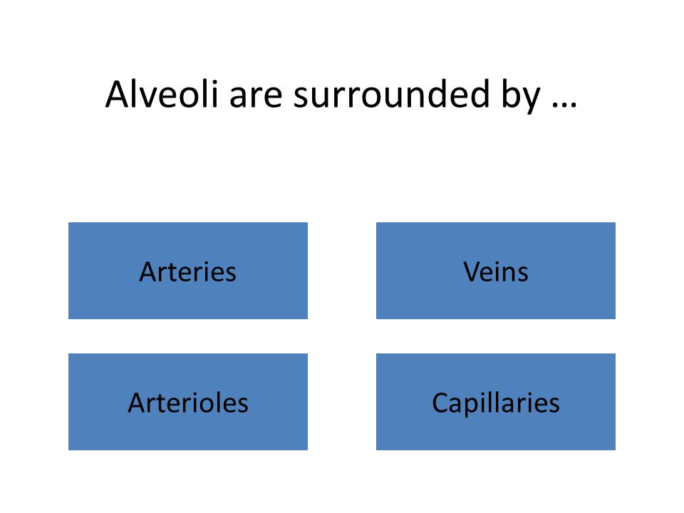 Alveoli are surrounded by … ArteriesVeins ArteriolesCapillaries