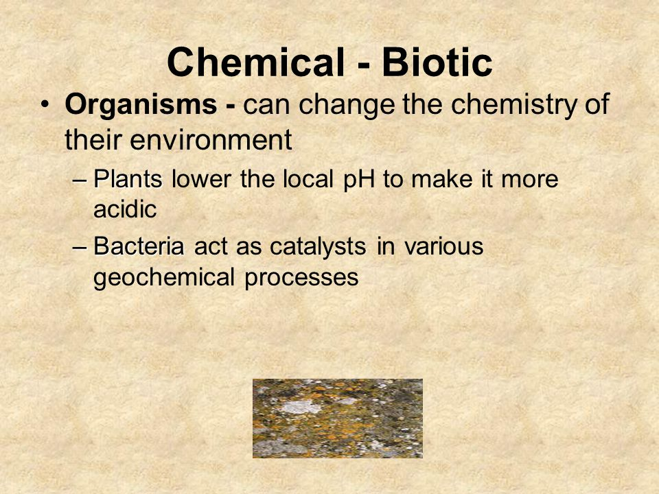 Chemical - Biotic Organisms - can change the chemistry of their environment –Plants –Plants lower the local pH to make it more acidic –Bacteria –Bacteria act as catalysts in various geochemical processes