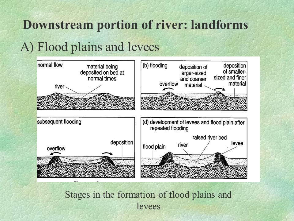 Downstream portion of river: landforms A) Flood plains and levees Note: although flood plains and levees are better developed in the lower course of the river, they can also occur between the upper course and lower course.