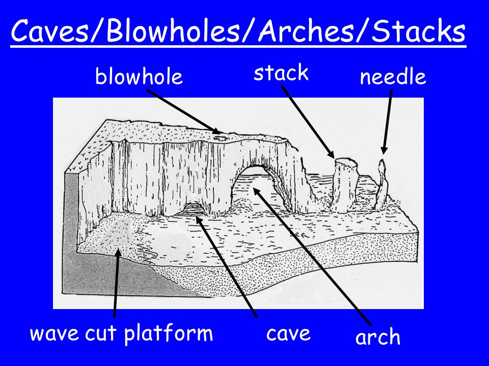 Caves/Blowholes/Arches/Stacks cavewave cut platform blowhole arch stack needle