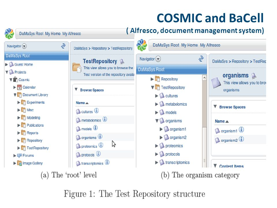 COSMIC and BaCell ( Alfresco, document management system)