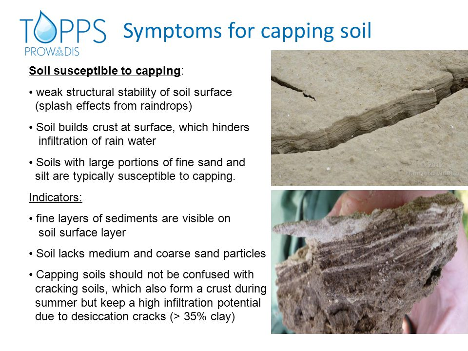 Symptoms for capping soil Soil susceptible to capping: weak structural stability of soil surface (splash effects from raindrops) Soil builds crust at