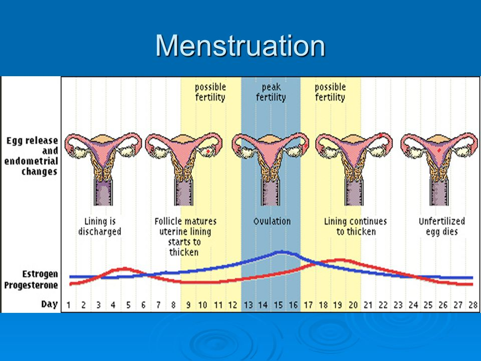 Menstruation