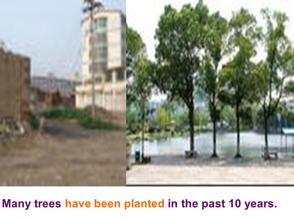 Many trees have been planted in the past 10 years.