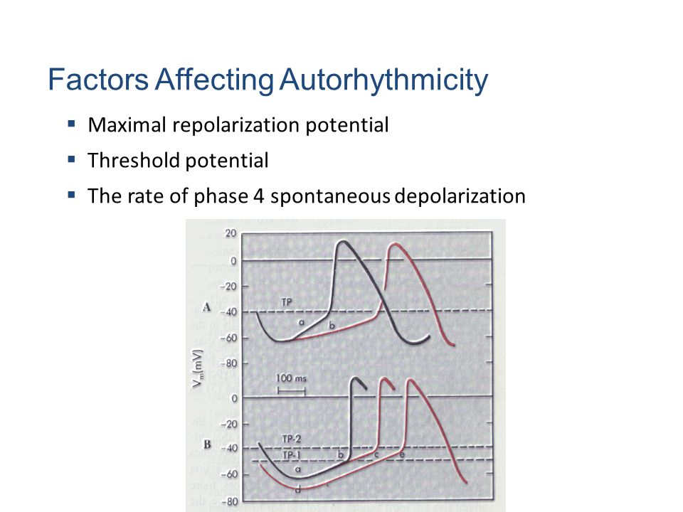 Factors Affecting Autorhythmicity  Maximal repolarization potential  Threshold potential  The rate of phase 4 spontaneous depolarization