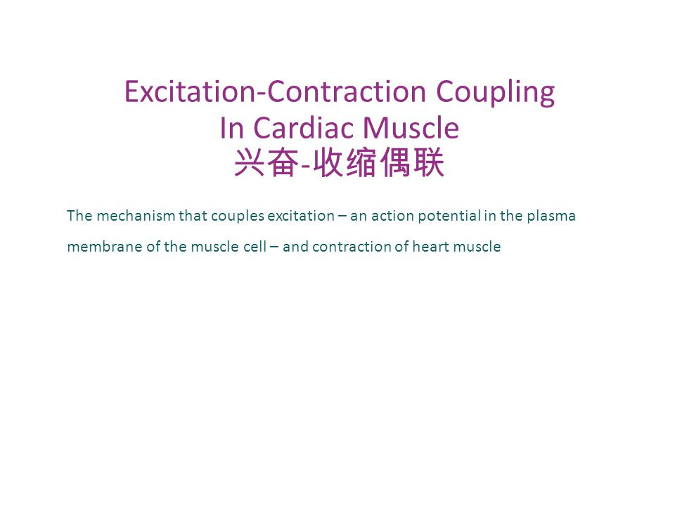 The mechanism that couples excitation – an action potential in the plasma membrane of the muscle cell – and contraction of heart muscle Excitation-Con
