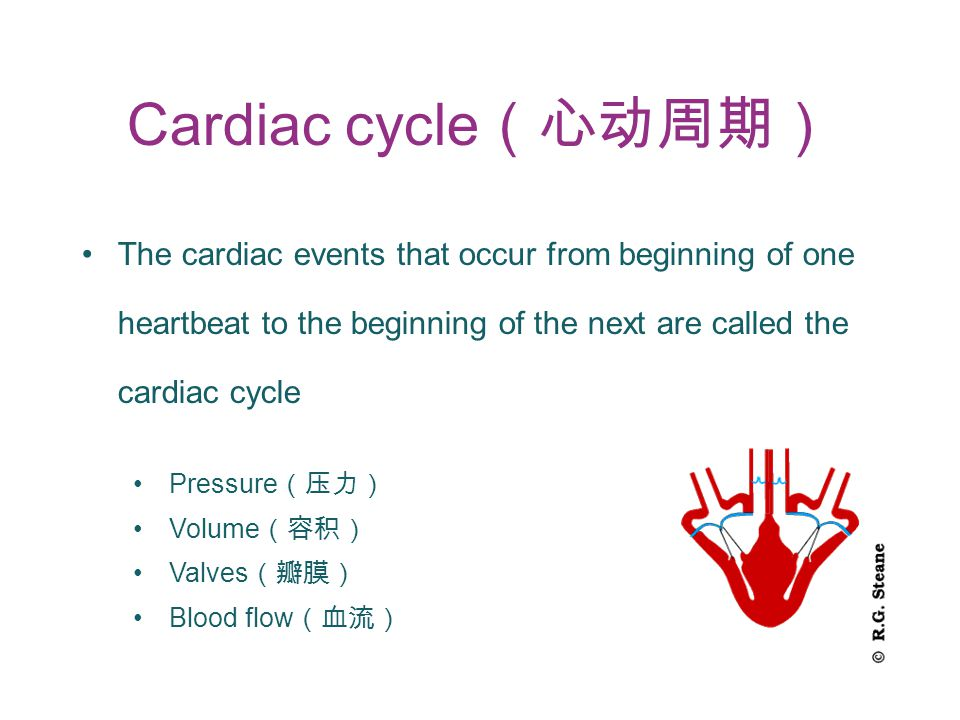 Cardiac cycle (心动周期) The cardiac events that occur from beginning of one heartbeat to the beginning of the next are called the cardiac cycle Pressure (压力) Volume (容积) Valves (瓣膜) Blood flow (血流)