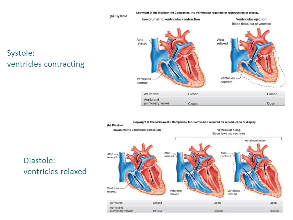 Systole: ventricles contracting Diastole: ventricles relaxed