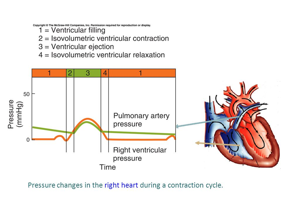 Pressure changes in the right heart during a contraction cycle.