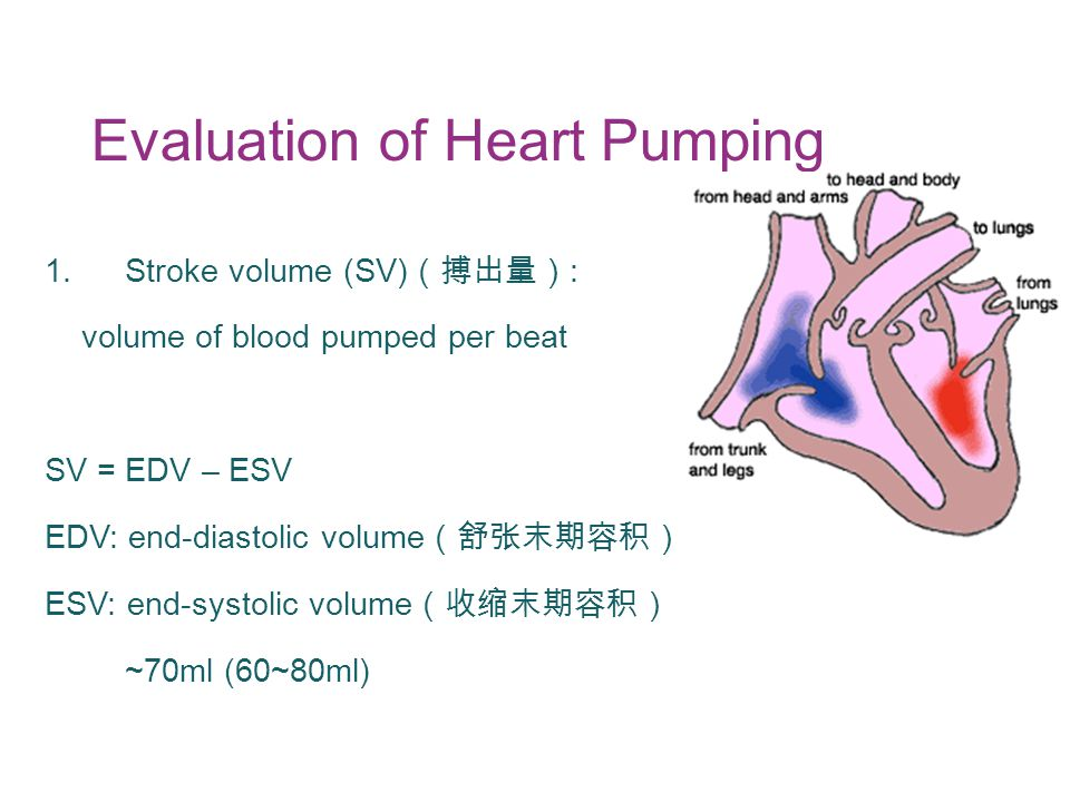 Evaluation of Heart Pumping 1.Stroke volume (SV) (搏出量) : volume of blood pumped per beat SV = EDV – ESV EDV: end-diastolic volume (舒张末期容积) ESV: end-systolic volume (收缩末期容积) ~70ml (60~80ml)