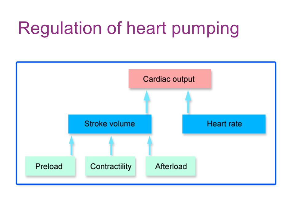Regulation of heart pumping