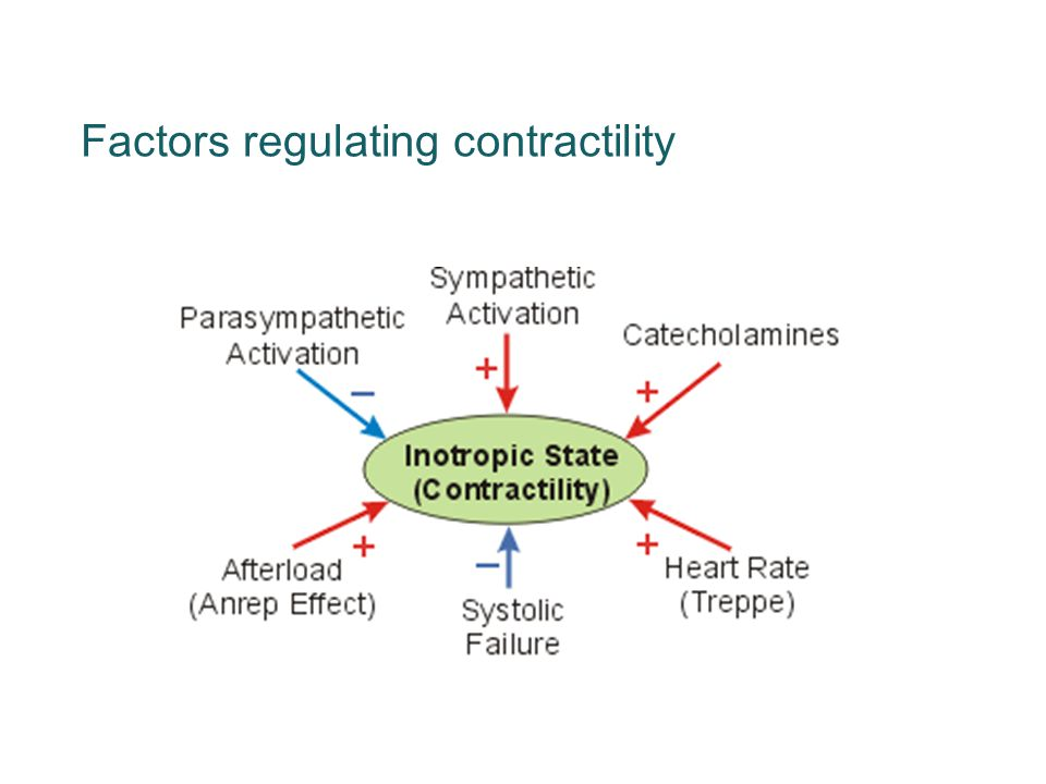 Factors regulating contractility