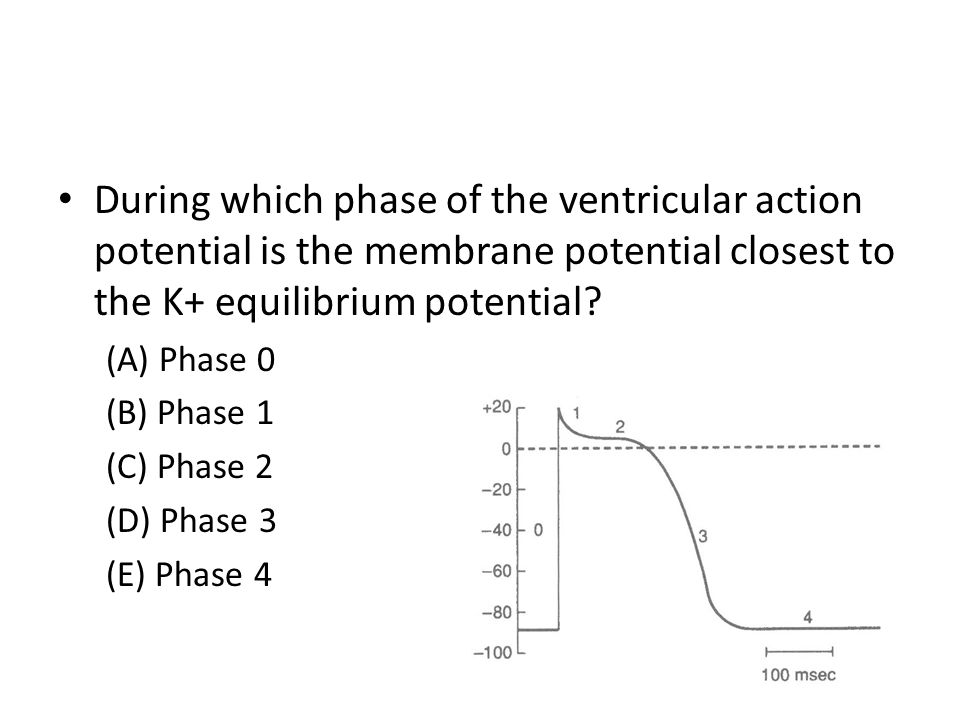 During which phase of the ventricular action potential is the membrane potential closest to the K+ equilibrium potential? (A) Phase 0 (B) Phase 1 (C)