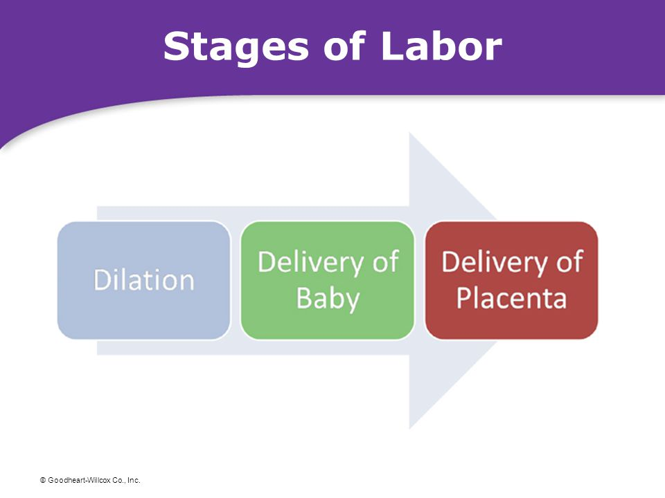 © Goodheart-Willcox Co., Inc. Stages of Labor