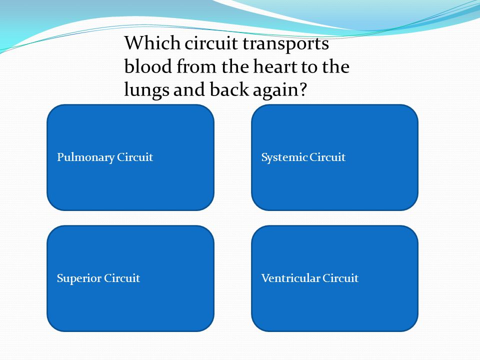 Pulmonary CircuitSystemic Circuit Superior CircuitVentricular Circuit Which circuit transports blood from the heart to the lungs and back again?