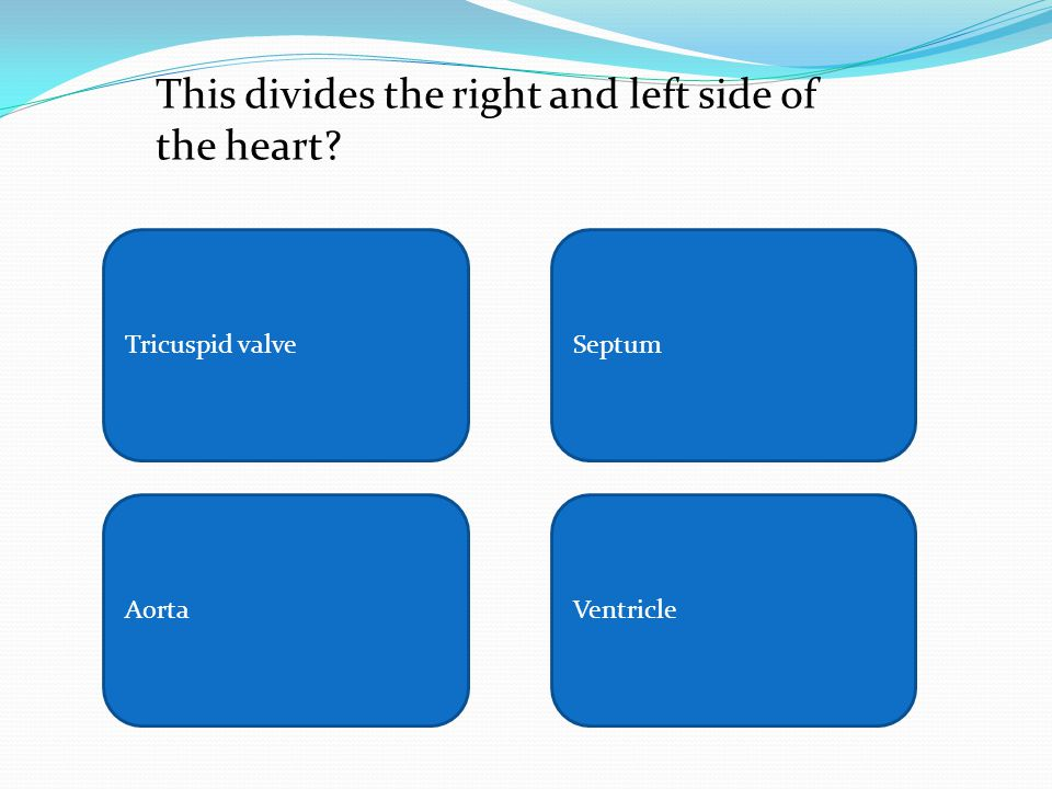 Tricuspid valveSeptum AortaVentricle This divides the right and left side of the heart?