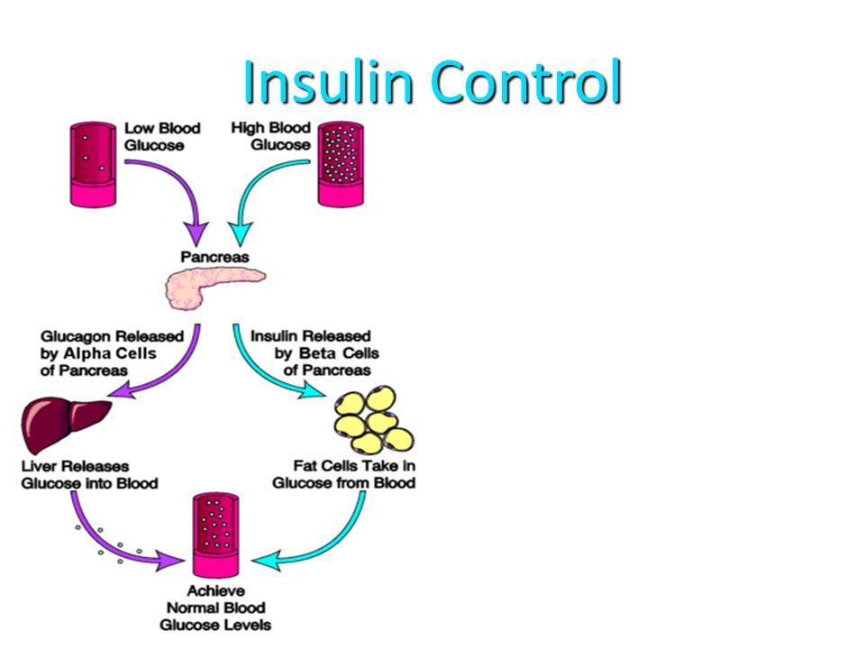 Insulin Control