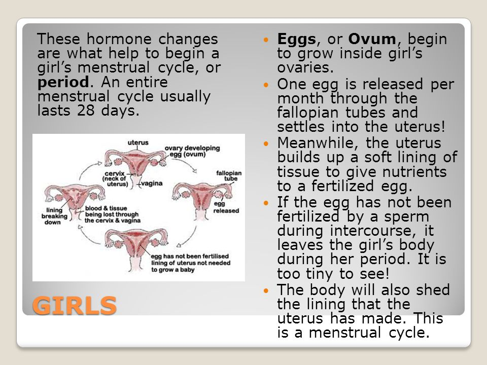GIRLS These hormone changes are what help to begin a girl's menstrual cycle, or period. An entire menstrual cycle usually lasts 28 days. Eggs, or Ovum