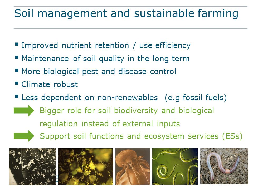 Soil management and sustainable farming  Improved nutrient retention / use efficiency  Maintenance of soil quality in the long term  More biologica