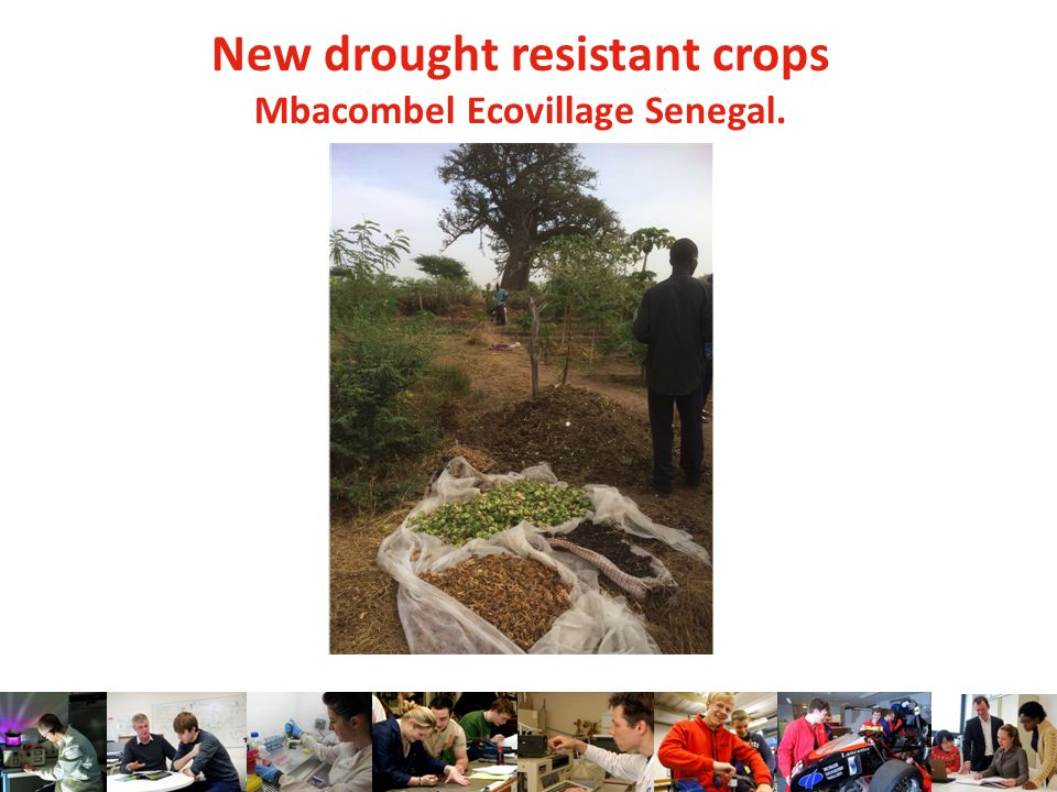 New drought resistant crops Mbacombel Ecovillage Senegal.