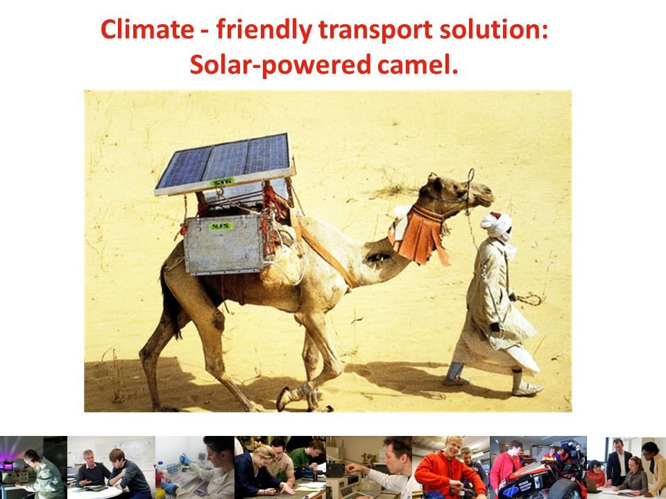 Climate - friendly transport solution: Solar-powered camel.