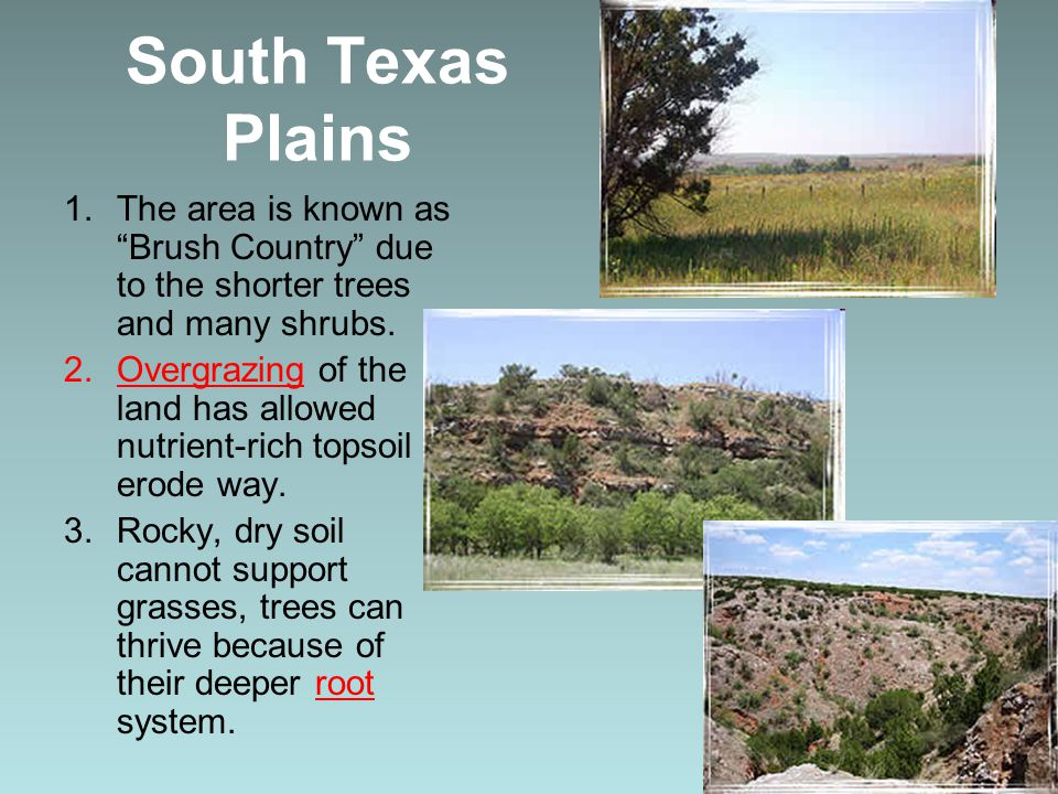 """South Texas Plains 1.The area is known as """"Brush Country"""" due to the shorter trees and many shrubs. 2.Overgrazing of the land has allowed nutrient-ric"""