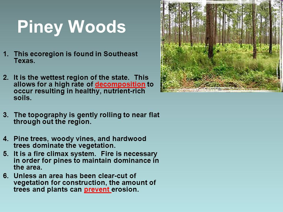 Piney Woods 1.This ecoregion is found in Southeast Texas.