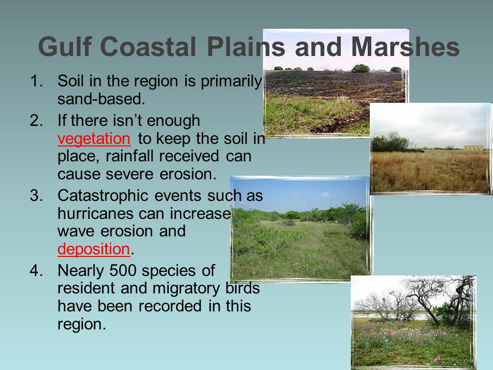 Gulf Coastal Plains and Marshes 1.Soil in the region is primarily sand-based. 2.If there isn't enough vegetation to keep the soil in place, rainfall r